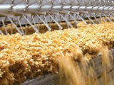 Cereal drying plant